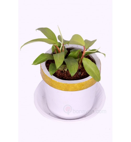 MONESTRA FOR DESK WITH GOLDEN WHITE PLANTER